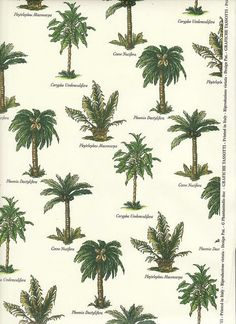 The best part of the beaches are the palm trees!  #travel  I love #palmtrees Repin Please
