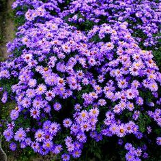 Ground covering plants are selfspreading, very affordable and colourful...click to see more...