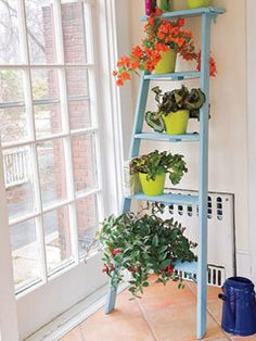 Pretty Plant Stand from an old ladder - GREAT way to take advantage of light from a taller window, growing plants all along the vertical. I wonder if my cats would stay off of it ??? (doubtful, lol)