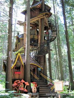 Lessons from a Tree House - Book Review