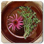 herb bed, herb garden, herbs garden