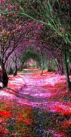 Tree Tunnel ~ Sena de Luna, Spain