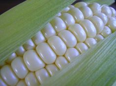 Stowell's Evergreen White Heirloom Corn 50 seeds by SmartSeeds, $2.99