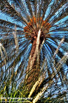 Dates the National symbol Tree for Arab Country  Dates are Lucky Words for Single Man & Women  Dates are Magic Words for Married Person  Without Dates you cannot remember any events  Without Dates there's no tomorrow.     How to find older hot women. Learn more on cougarsplace.com