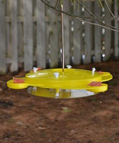 Butterfly feeder.  This would be perfect outside the window.