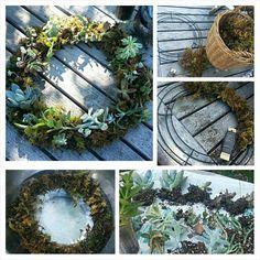 DIY succulent wreath..so easy!!! #succulents #wreath #DIY