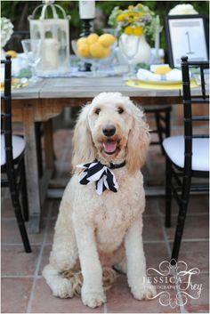Top 10 Lovely DIY Pet Collars