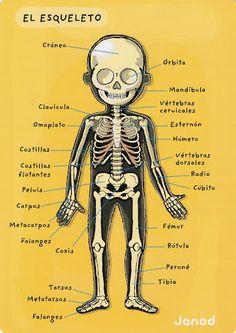 el cuerpo humano - @Melissa Squires Squires Young ;)