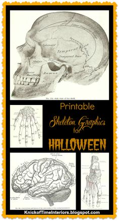 Free Antique Skeleton Graphic Printables for Halloween Crafting at KnickofTimeInteriors.blogspot.com