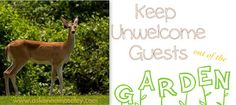 Keep deer out of the flowers.  I wish I had known this years ago!  #garden