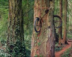 Boy left his bike chained to a tree then left for war. Years past the tree grew and took the bike with it.
