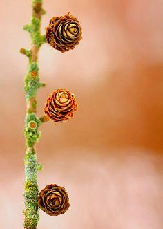 #nature #gorgeous