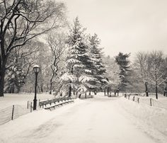 Central Park Winter Trees - New York City by Vivienne Gucwa, via Flickr