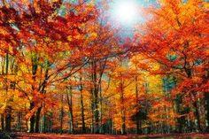 Jesień na zdjęcieach / Fall #pictures #zdjecia
