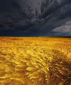 Approaching Storm, Barley Field, Germany