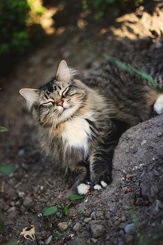 ♥ #cat