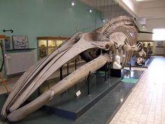 The Aquarium Museum
