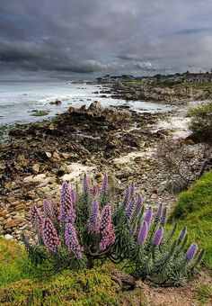 The Beauty of Monterey Bay