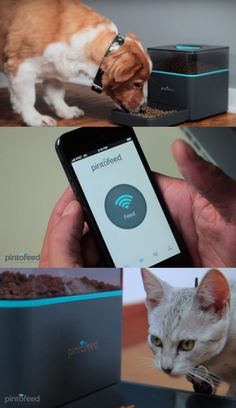 "Use your smartphone to feed your pet. in comments:"" Carol Good Now someone needs to figure out how to let the pet out back for their potty breaks."""