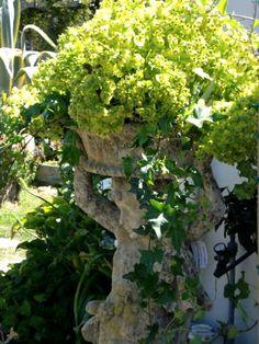 Euphorbias from our garden