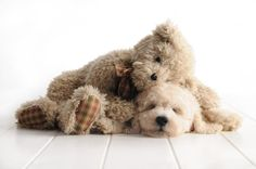 This is another one of my precious little Teddy Bear Goldendoodles.  www.teddybeargoldendoodles.com