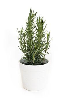 Plantar ervas aromáticas!