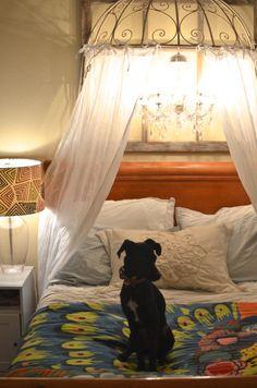 puppi, diy canopi