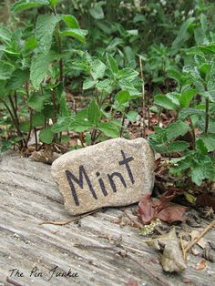 Easy DIY Plant Markers - label a rock with a Sharpie! plant markers, herb, diy plant, easi mint, favorit rock, easi plant