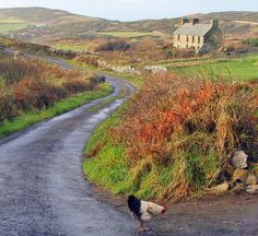 CAPE CLEAR ISLAND, County Cork, Ireland