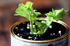 A Simple Guide to Regrowing 5 Everyday Veggie Scraps