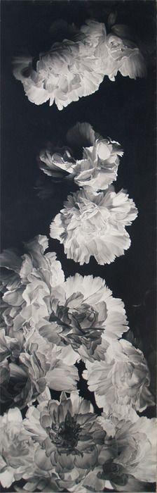 Joseph Stashkevetch  Cascade  2009  BW flowers