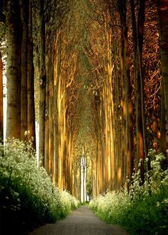 an aisle of trees