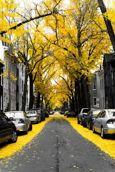 fall leaves, autumn, colors, city streets, yellow brick road, black white, trees, grey, roads