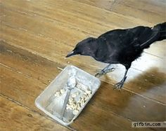 http://a.gifb.in/122012/1354558512_crow_feeds_cat_and_dog.gif