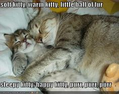soft kitty, warm kitty, little ball of fur  sleepy kitty, happy kitty, purr, purr, purr