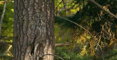 Can you spot the cleverly camouflaged critters?