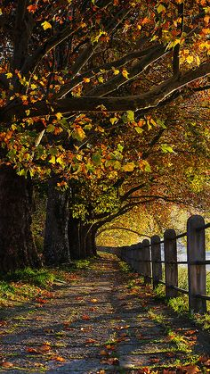 Fall ~ Slovakia by Wael Massalkhi