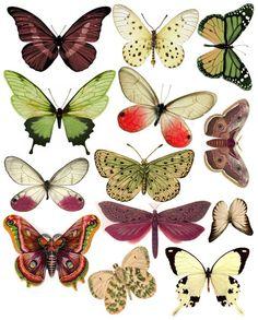 1289162330_55_FT838_swirlydoos_december_kit_butterflies_2010.jpg 481 ×598 pixel