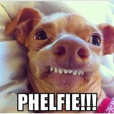 anim, silly dogs, funny dog selfies, bears, amazebal