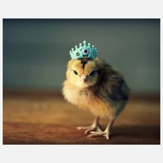 Chick In A Blue Crown Print