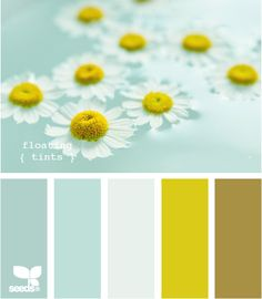 Color me daisies