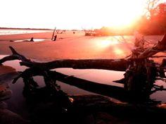 Wild Dunes Resort Bucket List// Charleston's Dolphin Discovery Sunset Cruise