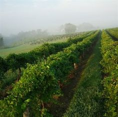 Raise a Toast to Missouri Wineries