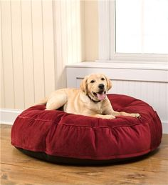 That's sweet (not so little anymore) Murphy loving this wonderful dog bed and hamming it up for the camera!