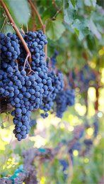 Trentadue Winery, Geyserville