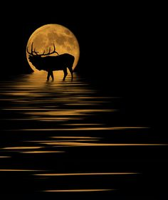 Elk In The Moonlight