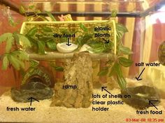 Hermit-Crabs - ideas for a 10 gal?