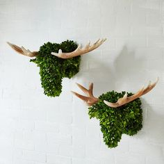 topiary animal heads // love this take on the antler trend
