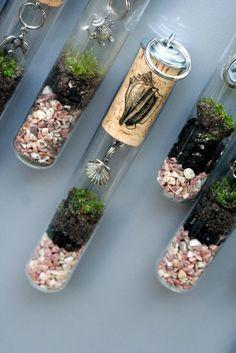 Test-tube terrariums
