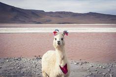 Llama with yarn tassels